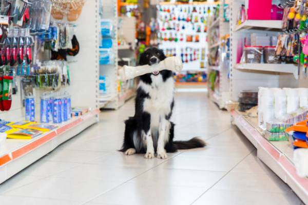 Pet Stores in Truckee, Tahoe City, and North Lake Tahoe